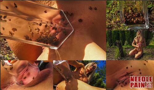 0249 QSt Ladybug m - Ladybug - Queensect, Queensnake, outdoor, bugs