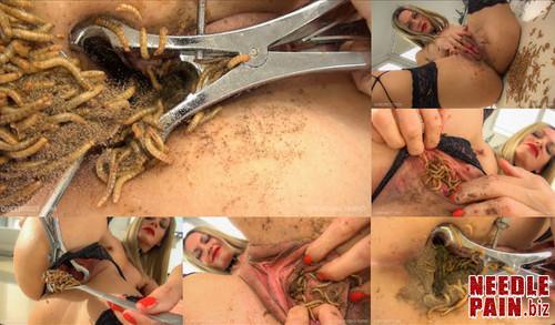 0397 QSt Zophobas Morio m - Zophobas Morio - Queensect, Queensnake, bugs, worm, insertion